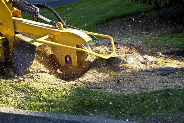 Tree Stump Grinding