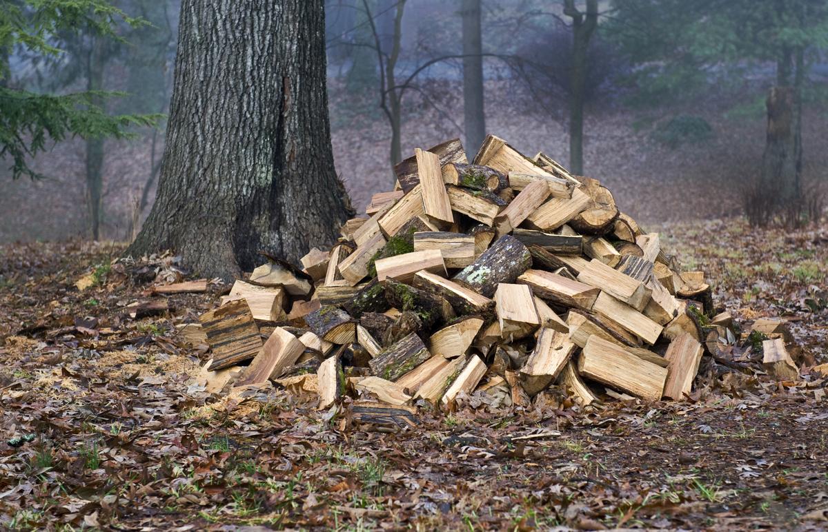 How to Prevent Deforestation