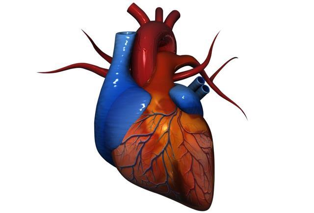 Human Heart Stock
