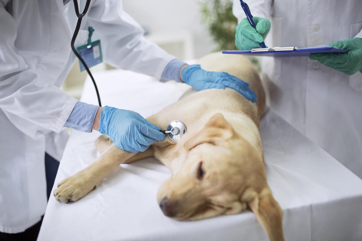 Neurological Disorders in Dogs