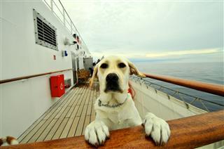 Cute Dog On Cruise Ship
