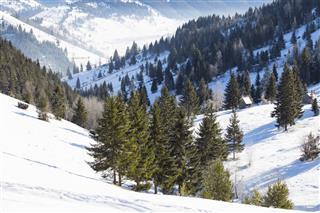 Mountain Winter Landscape With Fir Tree