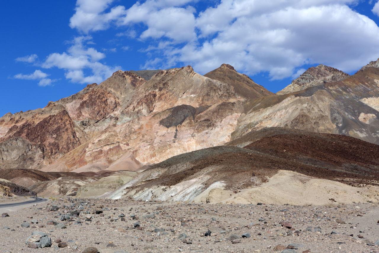 Gobi Desert Plants